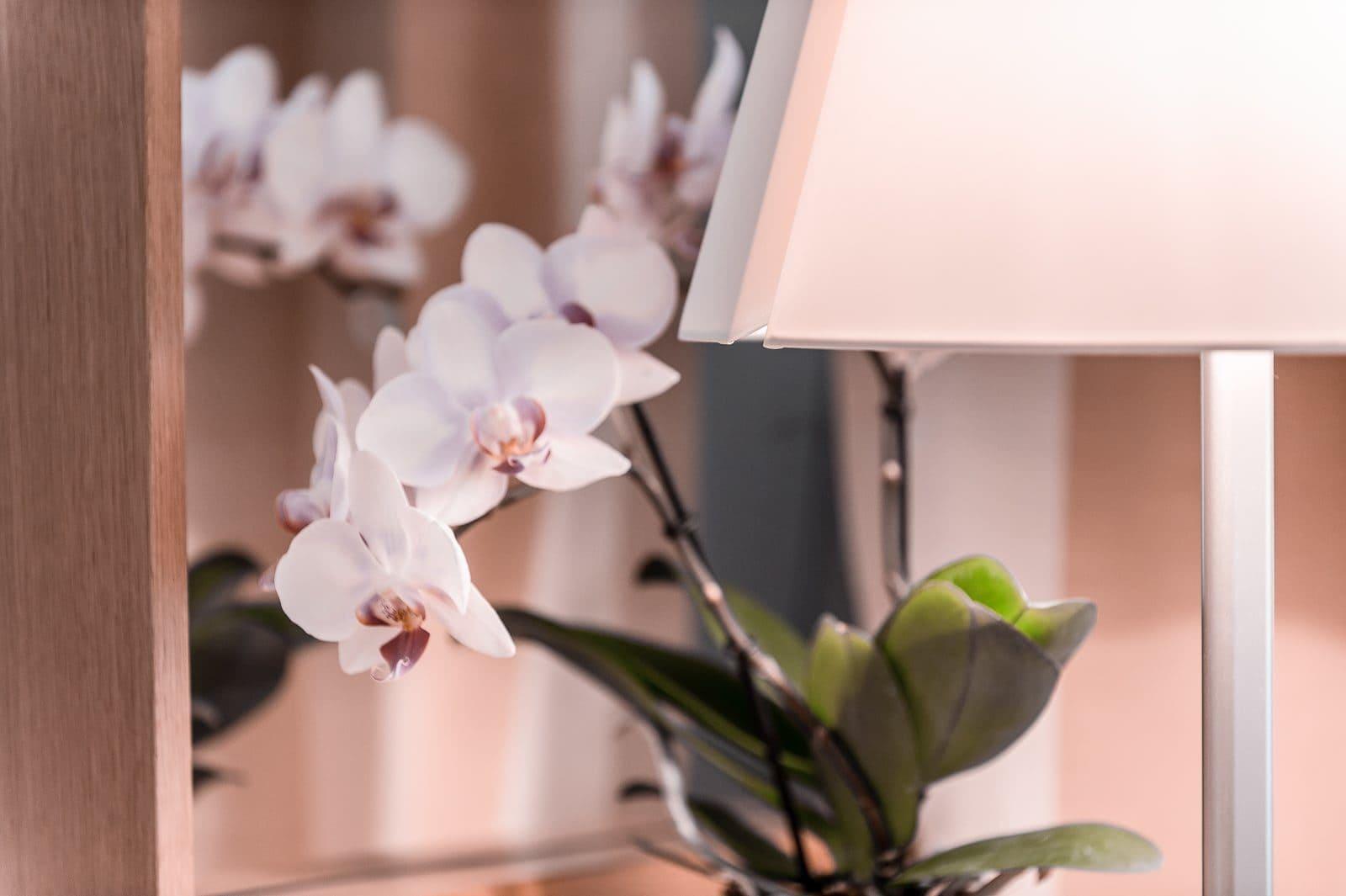 Detailaufnahme Blume und Lampe